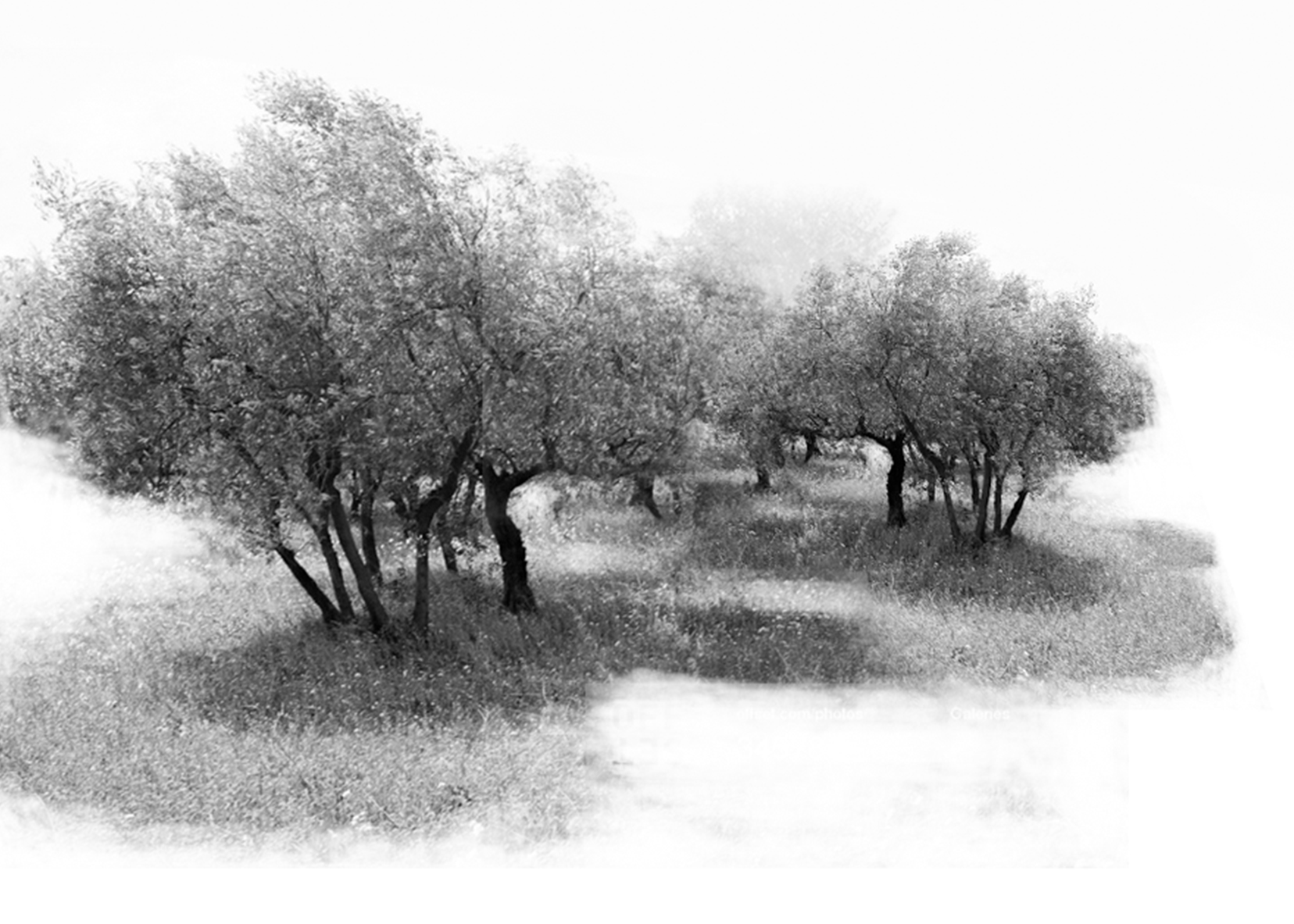 Fruit Grove-1
